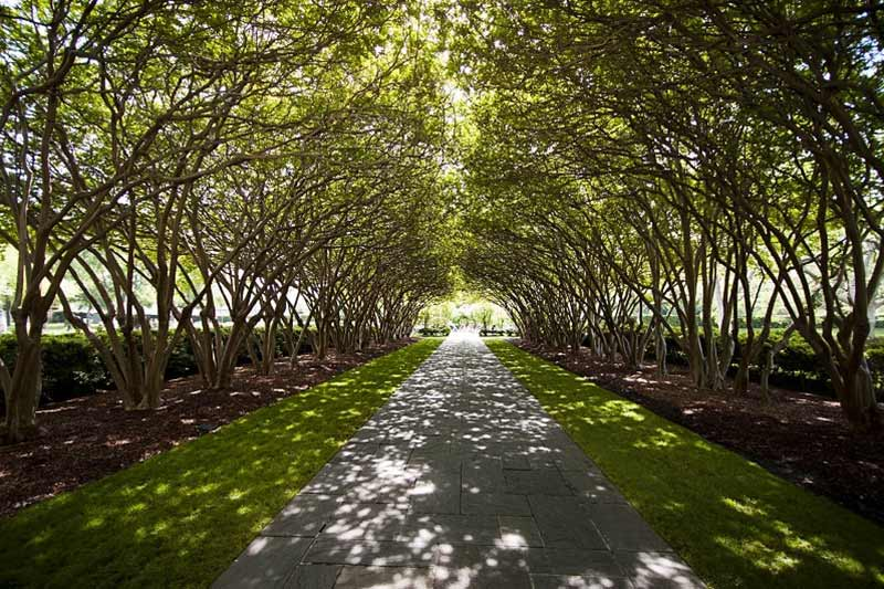 Shady Path through Trees at Dallas Arboretum & Botanical Gardens in Texas