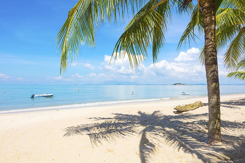 White sand and palm trees at Batu Ferringhi Beach in Penang