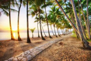 Sunset through Palm Trees at the Beach in Cairns - Your Next Business Class Destination | Just Fly Business