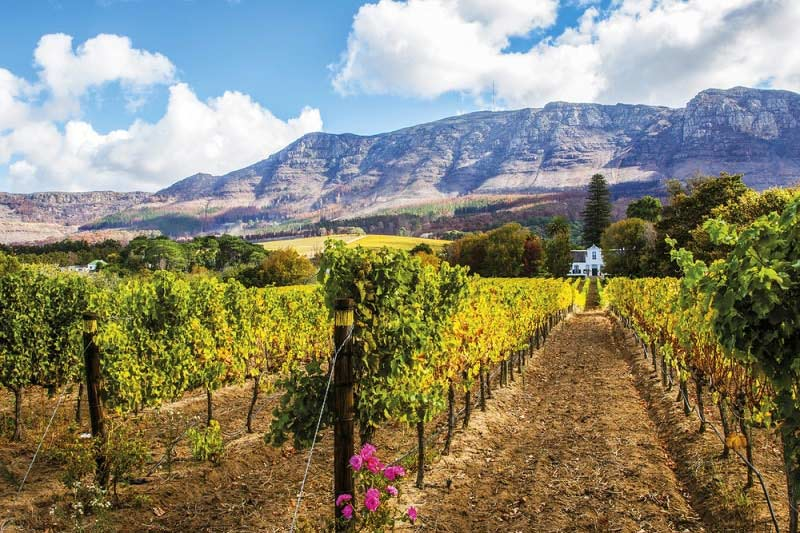 Constantia Valley Wine Route