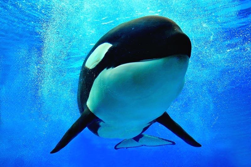 Seaworld Whale San Diego