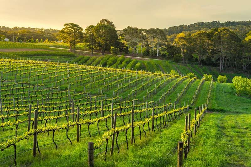 Wineries in Adelaide