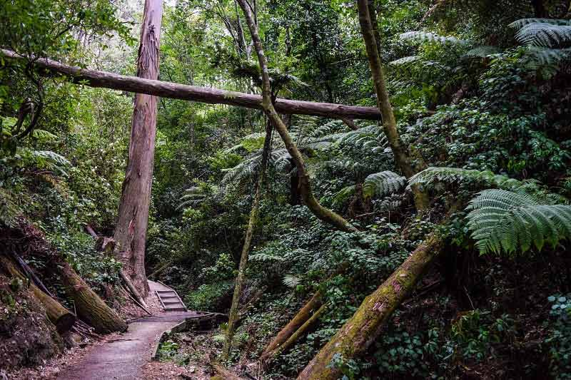 Walk trail at Zealandia in Wellington, New Zealand