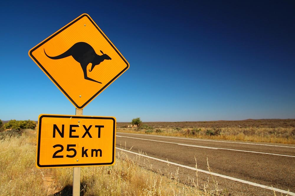 Kangaroo Road Sign - Your Next First Class Destination - Just Fly Business