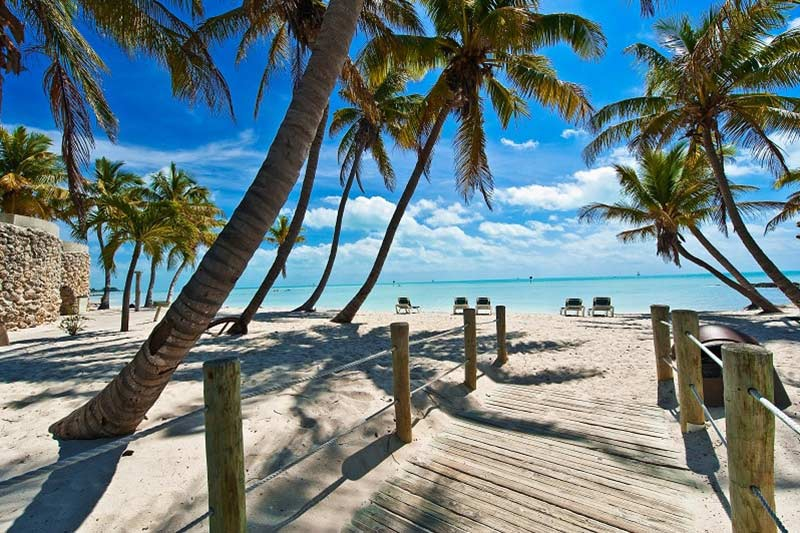 Palm Trees at the Beach, Florida Keys, USA