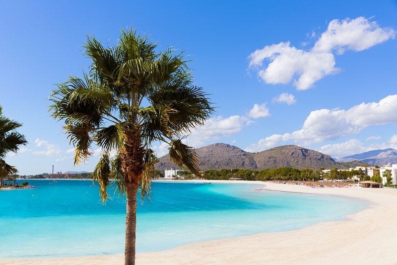 Palm tree and white sand beach on Majorca, Spain