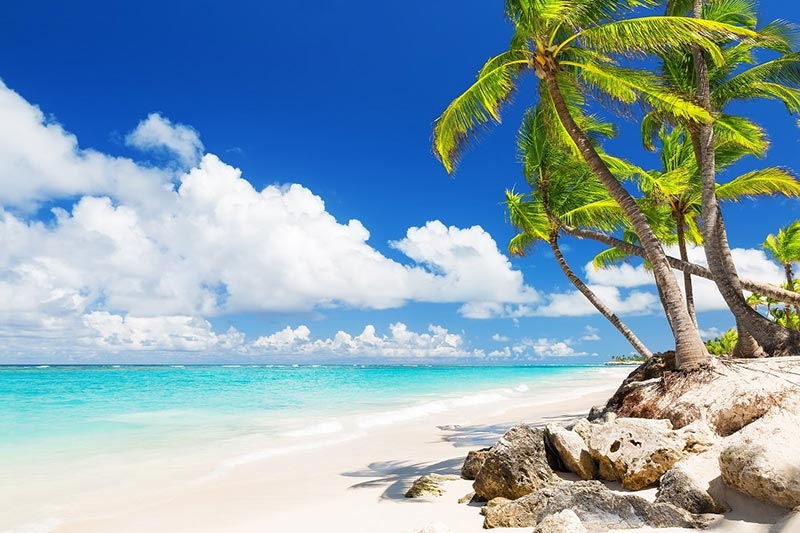White sand beach with palm trees at Isla Saona, Dominican Republic