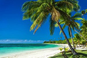 Palm Trees on the white sand beach in Yasawa Islands, Fiji - Your Next Business Class Destination | Just Fly Business