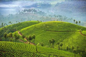 Tea Fields in Sri Lanka - Your Next Business Class Destination | Just Fly Business