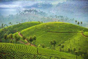 Tea Fields in Sri Lanka - Your Next Business Class Destination | Just Fly Business