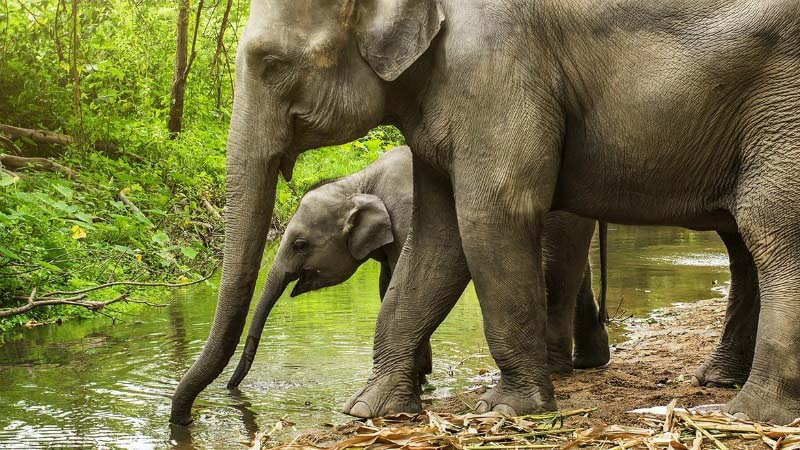 Elephants - Luxury Holidays at Banyan Tree Phuket - Just Fly Business