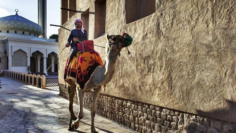 Camel - Luxury Holiday at Sofitel The Palm Dubai - Just Fly Business
