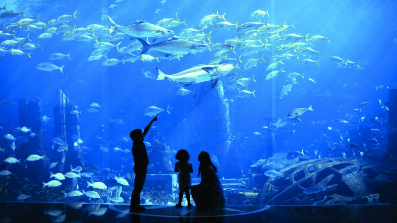 Lost Chambers Aquarium at Atlantis The Palm, Dubai