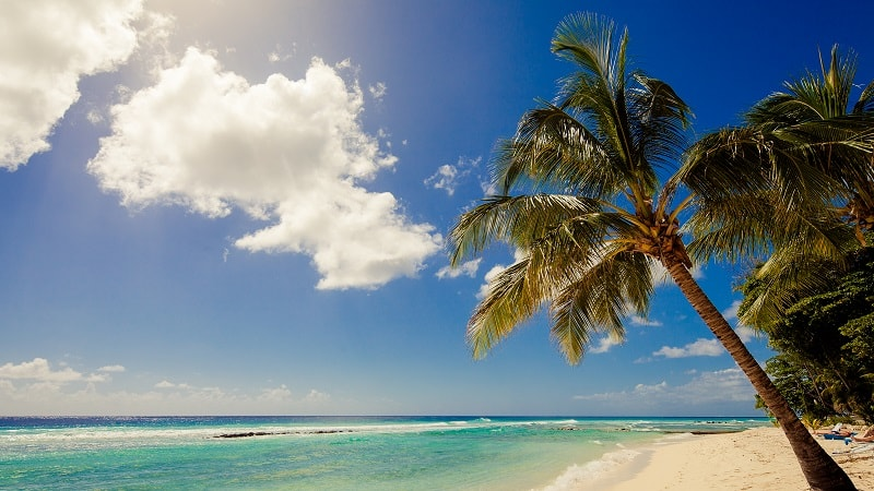 beach view with palm tree