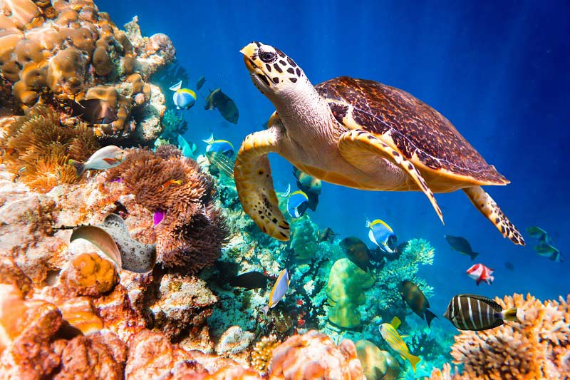 Sea Turtle in Maldives - Save Our Seas | Just Fly Business