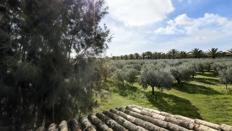 Olive Oil Orchard - Luxury Holiday at Anantara Vilamoura Algarve | Just Fly Business