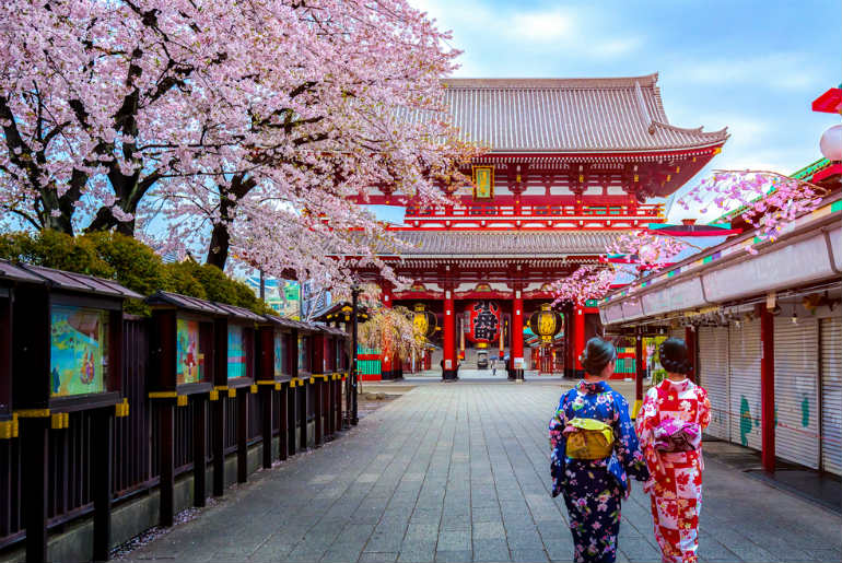 Two women in Kimonos walking towards Sensoji Temple with cherry blossoms around them