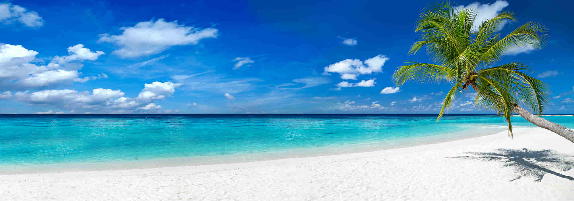 tropical paradise beach with white sand and coco palms | Just Fly Business