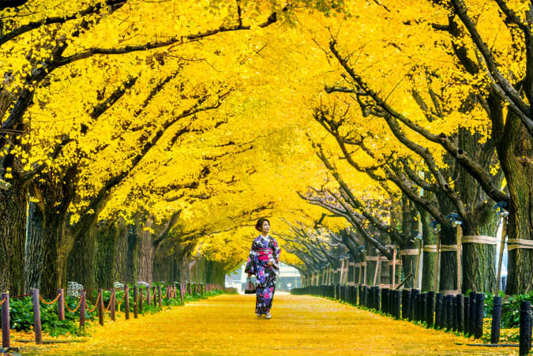 Japanese woman in a kimono walking through a park with bright yellow foliage
