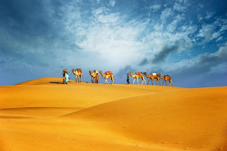 Camels walking through the Dubai desert