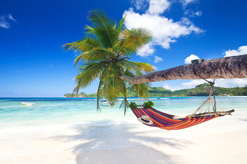 Hammock hanging from a palm tree over a white sandy beach in the Seychelles