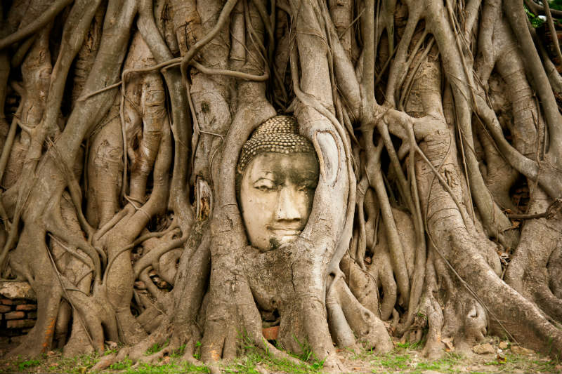 Buddha head in tree roots in Ayutthaya Thailand