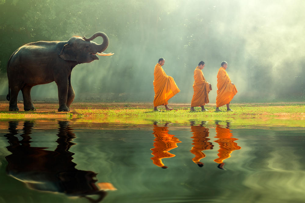 Elephant and monks walking near a lake in Thailand
