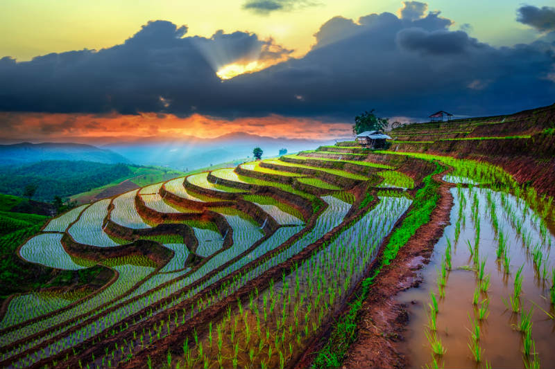 Rice fields on a hill at sunset in Chiang Mai Thailand
