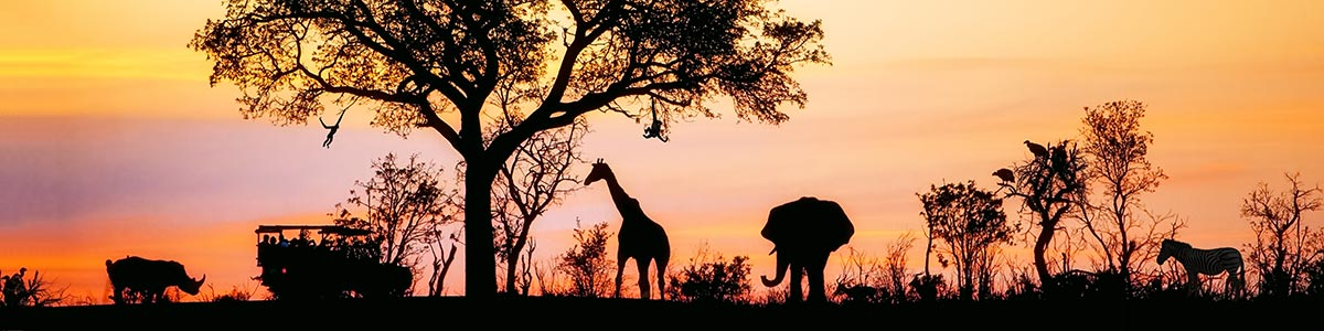 African Animals seen in silhouette at sunset