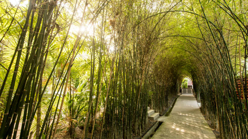 Bamboo covered walkway at Outrigger Koh Samui