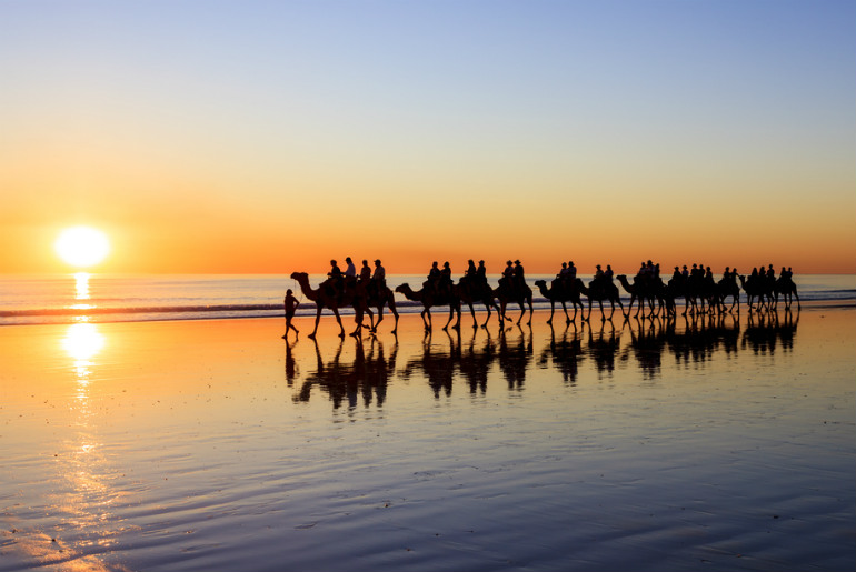 Camels on beach at sunset Broome