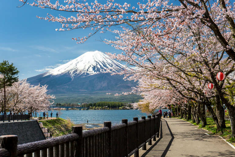 Mount Fuji and sakura cherry blossom in Japan